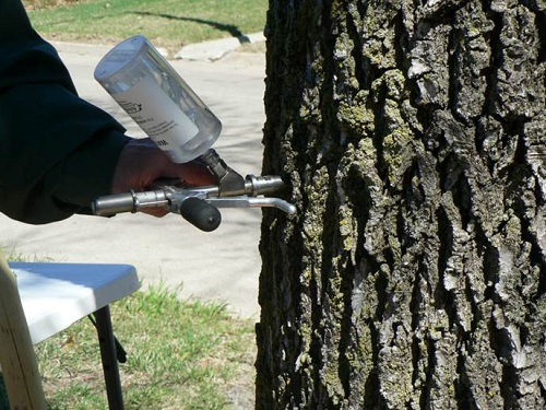 Treatment of Ash Trees